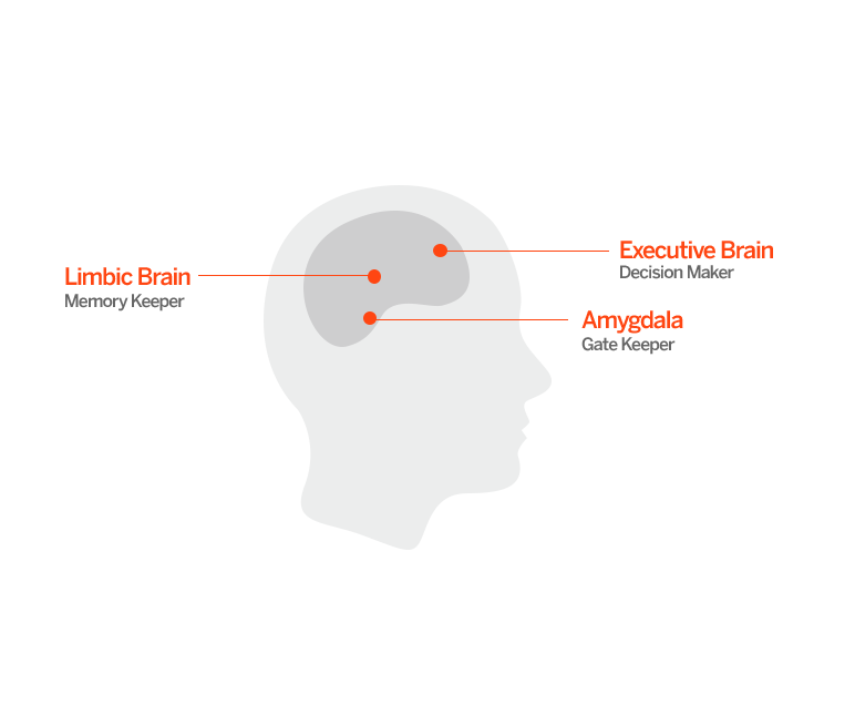 Brain_772x645.png